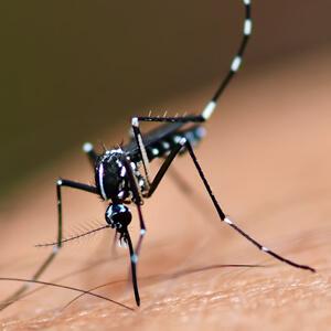 Spain Radarcan Personal Mosquito Repeller Plus R-100 - Chikungunya, dengue, Zika mosquito & Aedes aegypti